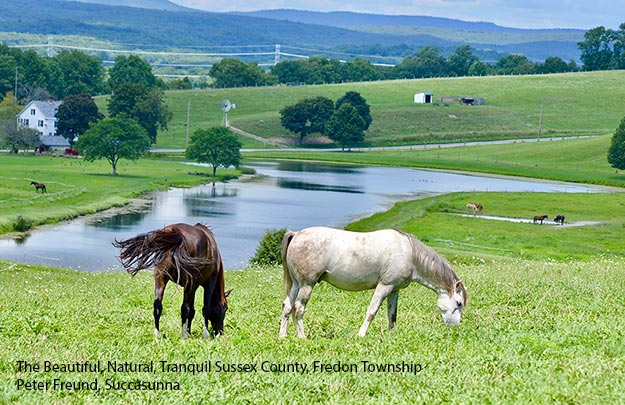 Horses and landscape